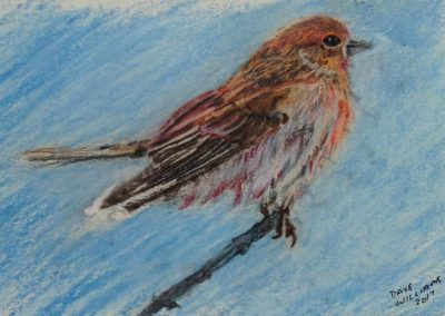 "<em>Sparrow</em>, colored pencil, 5"" x 7"""