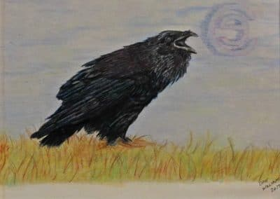 "<em>Crow</em>, colored pencil, 5"" x 7"""