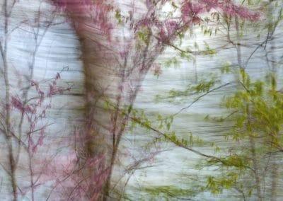 """<em>Spring</em>, photography, 24"""" x 60"""""""