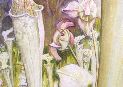 "<em>Pitcher Plants</em>, watercolor, 20"" x 14"""