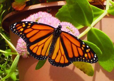 Open Monarch