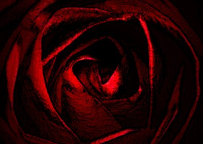<em>Midnight Rose</em>, photography